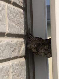 なに蜂の巣かわかりますか? 自分で処理するか業者に頼むか悩んでいます。