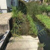 わが家の裏の用水路ですが、毎年、こんな感じですごい雑草が生えるんです。 いちおうコンクリートなんですが、なぜか川の壁とコンクリートの境に段差があり、そこから雑草が生えてきます。  抜いても抜いても生え...