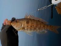 魚の名前? 天草西海岸で釣りました。
