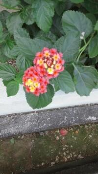 花の名前  この花の名前を教えて下さい。 (ピンぼけでスミマセン)