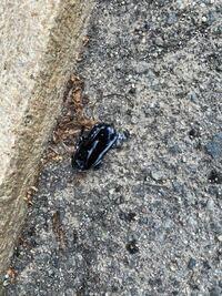 ゴキブリでしょうか? 7センチくらいあります。