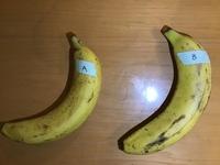 りんごから放出されるエチレンガスによるバナナへの効果の実験について質問です。 バナナとりんごを袋に入れて4日間保管したもの(A)、バナナだけを袋に入れて4日間保管したもの(B)の2つを用意し経過を見ました。...