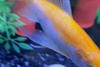 飼育している金魚の腹びれに白い点が出来ている事に気付いたのですが、何かの病気でしょうか?