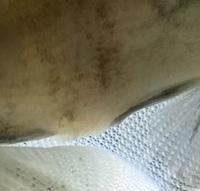 オヤニラミを飼っています。 肛門付近にトゲトゲがあり、少し膨らんでいるように見えます。 下から見ると、赤くなっているように見えました。 これは、何かの病気でしょうか?