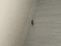 この虫はなんでしょうか?  緑で細長いです。上の方にいたので写真が小さくぶれていますが触って外に出しても問題ないですか?