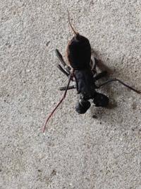 これは何という虫か教えてください。タガメかタイコウチなのでしょうか。