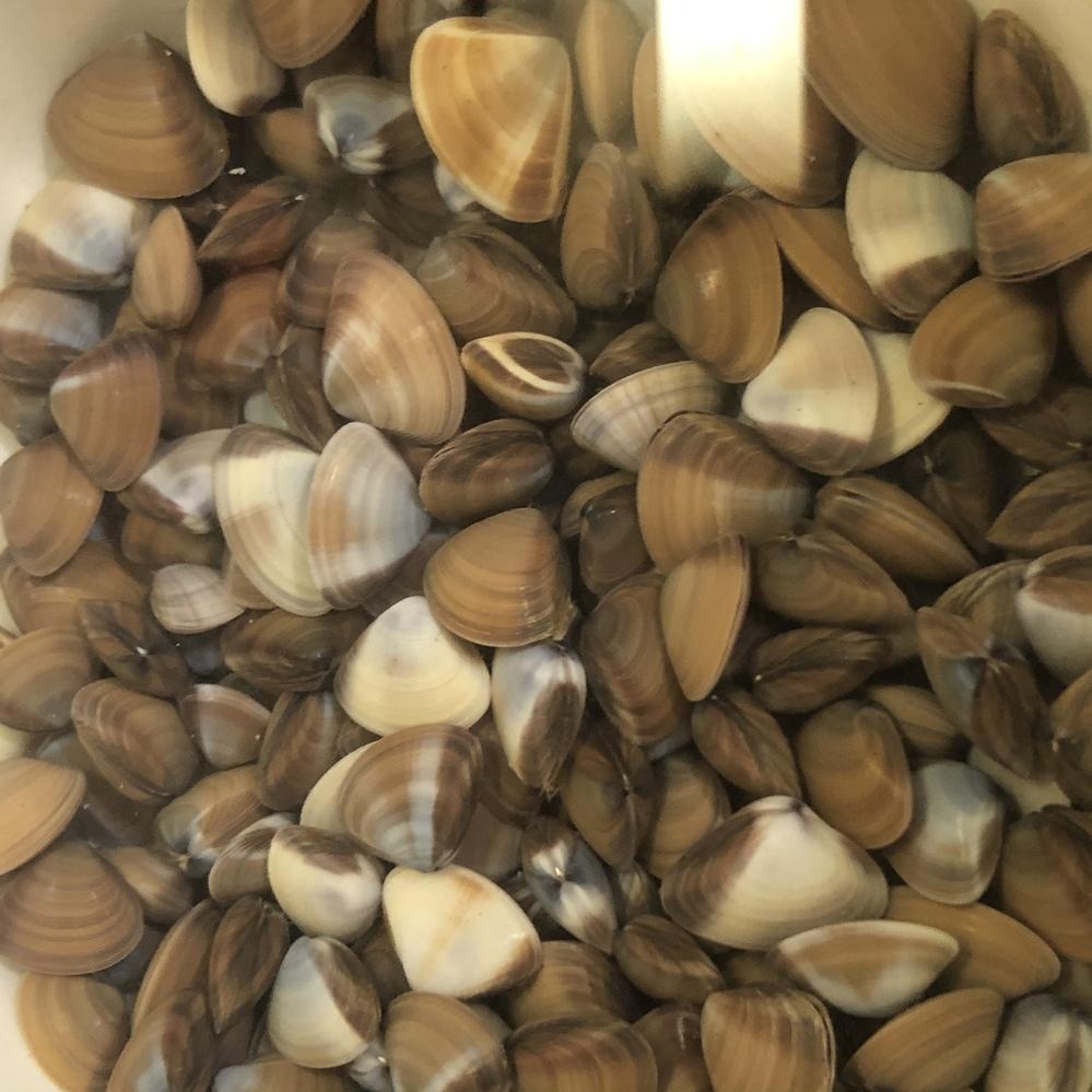 海で子供が見つけました。この貝は、食べられる貝でしょうか?名前も分かりません…。