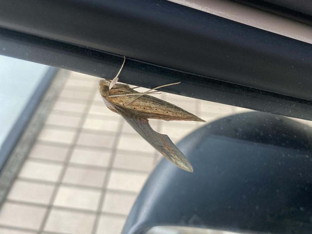 この虫はなんという名前ですか? 害はあります??