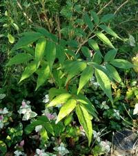 何の植物かわかる方おられますか? 皇帝ダリアですか?