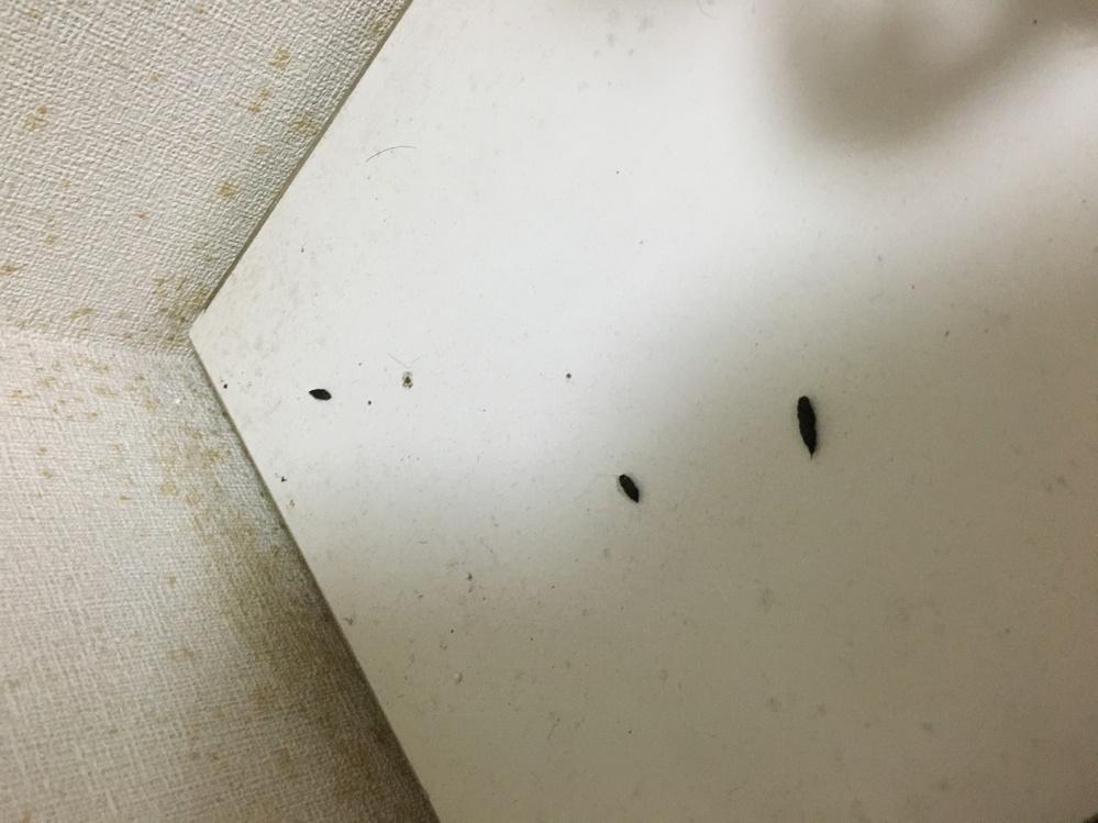 実家に久々にもどると部屋の隅にこのような黒い物体をはっけんしました。 ゴキブリにしては大きく1センチか2センチくらいの大きさです。 ネズミでしょうか? 壁にも似たサイズのものがくっついてました。
