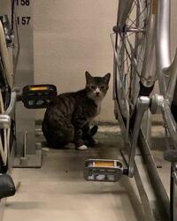 野良猫に詳しい方にお聞きしたいです。 9月21日の21:30頃に家から50メートルほど離れた公園で野良猫を見かけ、こちらを見ながら鳴いていたので心配で1時間ほど見ていました。  後で調べてみたところ、縄張りを守るために鳴いているようだったのでそっとしておくことにしました。  そして9月29日の21:45頃に同じ猫を同じ場所で見かけました。その時塾帰りで自転車に乗っていたのですが、今度は猫が家...