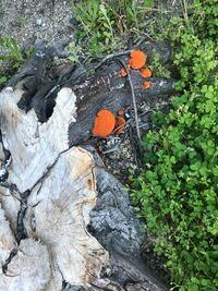 このオレンジ色のキノコは なんていうキノコですか??