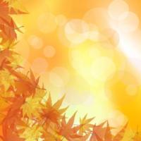 皆さん秋は好きですか?