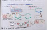 高校生物についての質問です。 組換えDNAについて、 大腸菌にヒトのインスリンを生産させた場合、大腸菌細胞内にプラスミドが増殖する結果、多量のヒトインスリンが得られると教科書に書いてるんですが、ヒトインスリンはどうやって集めるのでしょうか? 教えていただけると幸いです。