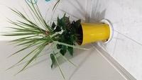 今日、寄せ植えの観葉植物を買いましたが 種類がわかりません。 どなたか、お分かりになりませんか?
