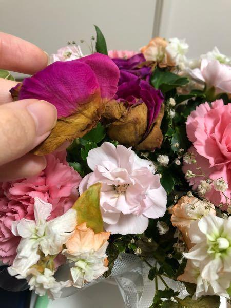 枯れた薔薇を向いたらまだ鮮やかな部分が残ってました、むかない方が良いんでしょうか?