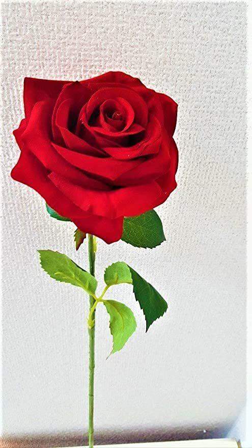 一番好きな花はバラですか? (^。^)b