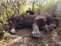 現存する最強の食肉目は ホッキョクグマかコディアックヒグマですか? やっぱりネコ科じゃなくて熊系ですよね?