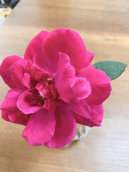 バラの名前を教えて下さい。 LDブレスウエイトを注文したらこのバラが届きました。 明らかに違うと思いますが何と言うバラでしょうか?