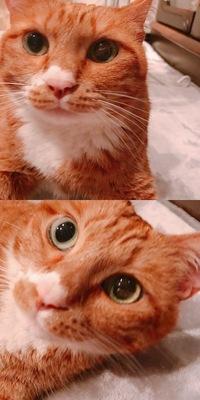 飼い猫の目に傷っぽいものが付いており、どなたかこれが何か分かる方いらっしゃいますでしょうか? 先程他の猫とじゃれていたため、もしかしたらその時に傷が付いたかもしれません。 痛がっている様子はありませ...