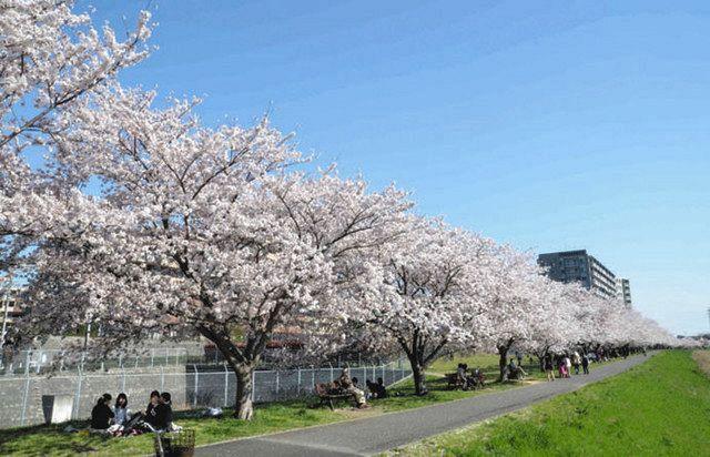 【自由帳】 市区町村の自由帳 No.636 千葉県【八千代(やちよ)市】 川沿いの桜がとてもきれい! 回答数稼ぎ、暇つぶし等にお使いください ※シリーズ化する予定です。北から南へ紹介します リ