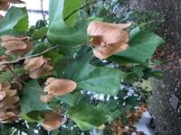 こちらは何という植物でしょうか? 面白い実がついておりました。