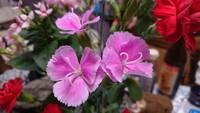 どなたか此の花の名前が分かる方はいらっしゃいますか?