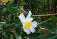雑木林で咲いてました。花の名前教えて下さいm(__)m
