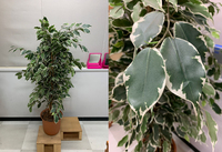フェイクグリーン、イミテーションについての質問です。 添付画像のフェイクグリーンを買い足したいと考えているのですが、 こちらは何という植物をモデルとしておりますでしょうか?  お分かりになる方が居れば...