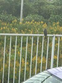 この鳥の名前は何て言うのでしょうか?よろしくお願いします致します。