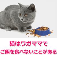 猫はわがままな 生き物ですか? わがままでエサを 食べないとか・・・ (ΦωΦ)