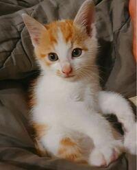 この写真の猫の種類がなにかわかる方、教えていただきたいです。猫の種類など全く知らなくて...><