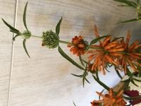 こちらの植物の名前はなんでしょうか? 教えていただけると嬉しいです。 (写真が横になってて申し訳ないです)