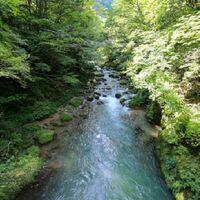 山、山林を所有されている方にお伺いをいたします。 ・ 所有されている山林に川はありますでしょうか。 いかがでしょうか。 ・ もし、山林に川がある場合はイワナやヤマメなどの淡水魚の魚が泳いでいますでしょうか。
