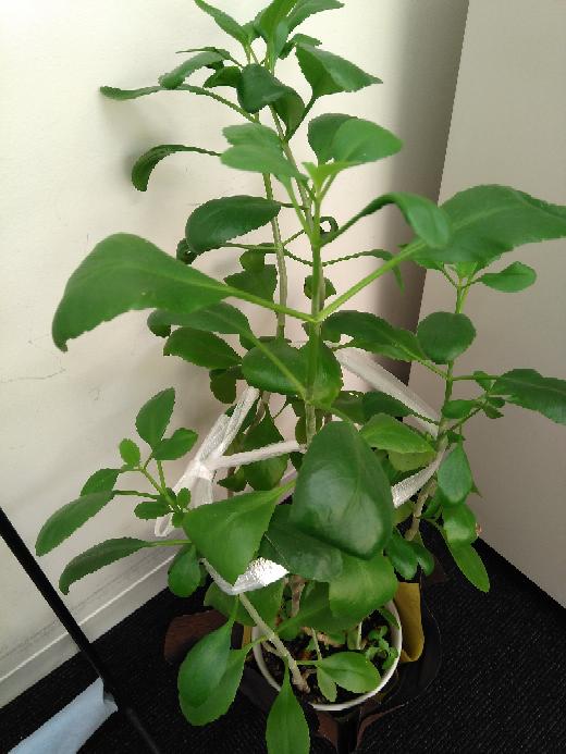 写真の植物の名称を教えてください。