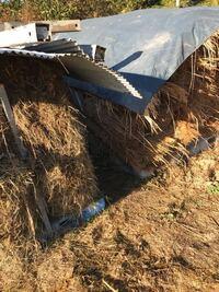藁 カヤ 枯れ草 来シーズン使うならどの様に使います?  漉き込むか、マルチ代わりに使うか、腐らして発酵させる?  枯れ草は、朝に湯気が出てます。 藁とカヤは50年前完全乾燥してます。