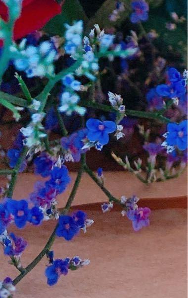 この花はなんて言うお花ですか?勿忘草(ワスレナグサ)ですか?