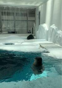 先日海遊館に行ってきました。 分かりにくいのですがこのアザラシちゃん達の名前はなんですか?  手前のアザラシちゃんはずっとプカプカ浮いてて、 奥のアザラシちゃんは落ちてくる氷?を食べたり(?)してました...