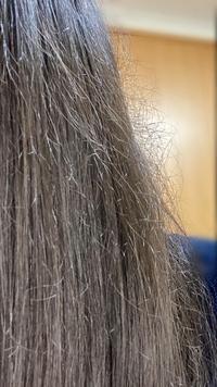 髪の毛のケア  髪の毛がまとまらず困っています 画像のようにボッサボサでいつもポニーテールにまとめてしまいます ただのポニーテールを作るのもまとめる過程で絡まってしまいかなり大変です 今1番すべきケアはなんでしょうか?