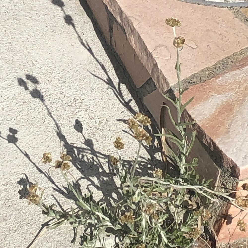 画像の花の名前がわかる方はいませんか?