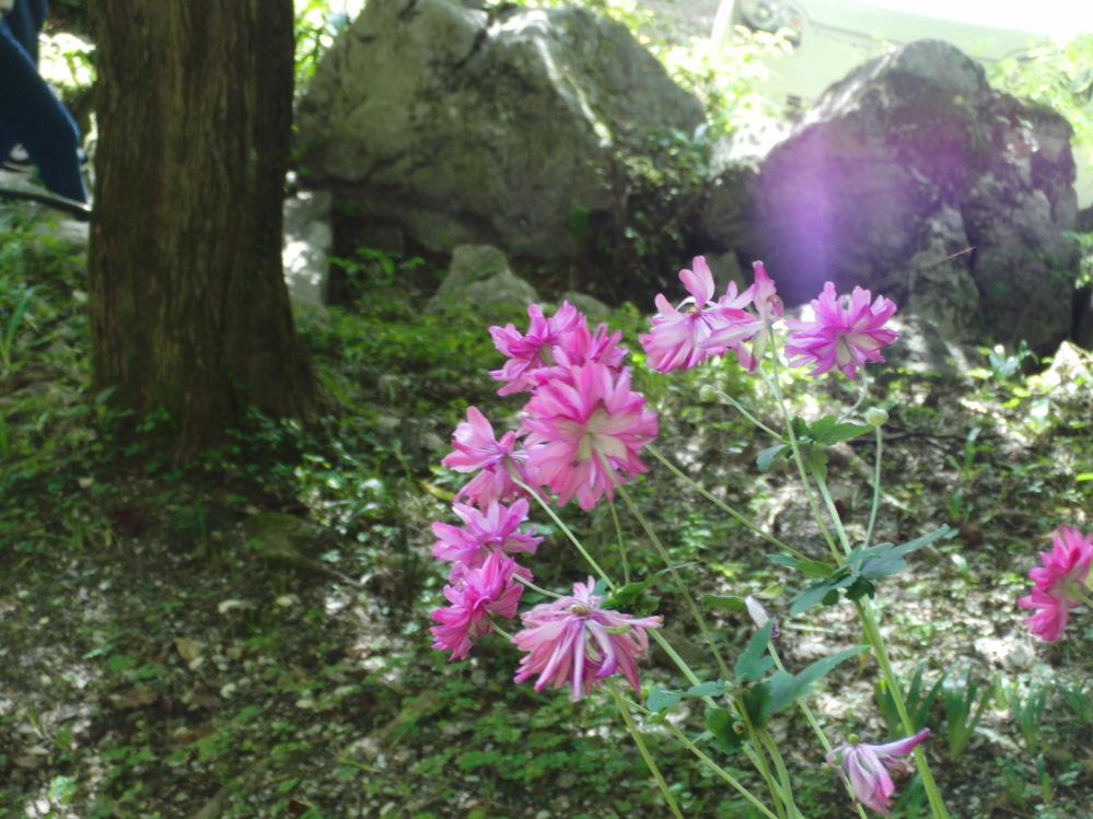 このお花の名前をご存知の方がいれば教えてください。 10月の終わり頃に、秩父の橋立鍾乳洞前あたりで見つけました。 れんげに似ているのですが、開花時期が合わず…どなたかご存知ではありませんか?