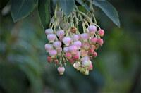 植物です。 いちごの花という人がいるのですが。。。 名前が解りません。 どなたか詳しい方教えて下さい。 宜しくお願いします。