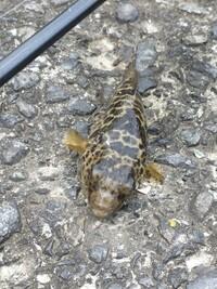 この魚は何でしょうか? 今釣れました