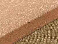 この虫ってなんてゆう虫ですか? 和室の壁引っ付いていたんですけど、   画質が悪いかもですが、すみません、