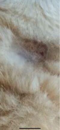 これは猫カビですか?