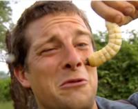 昆虫の幼虫…例えばイッカククワガタの幼虫や、芋虫など…こういうものは生で食べれますか? もしくは生で食べる習慣のある民族などありますでしょうか。  一般的な話で結構です。例えば、牛レバーも厳密に言えば危険ですが、一般的に食べられているので、それは食べれるとします。