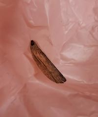 これはゴキブリの羽根でしょうか?棚を整理していたら、ショップ袋に張り付いてありました。  気になって眠れません。