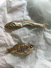 犬用のおやつ にぼし の中に  あきらかに違う魚が入ってました。  与えても大丈夫でしょうか?  それと何と言う魚なのでしょうか?