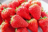 これから迎える旬のイチゴ  イチゴには、何をつけて食べますか? ・そのまま ・グラニュー糖 ・コンデンスミルク ・生クリーム ・ミルク ・その他