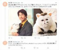 「おじさまと猫」ドラマ 1月6日から すっごく楽しみなんですが、 猫は ぬいぐるみを 使ってますか?! どう見てもぬいぐるみにしか見えないんですが